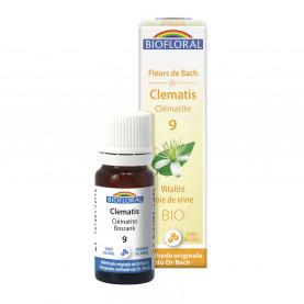 Clematis, granules   Inula